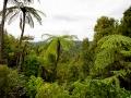 pic04_regenwald-mit-palmen-und-co.jpg